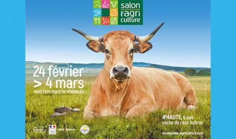 Haute, la vache vedette du salon international de l'agriculture 2018