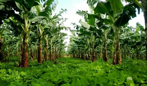 agroécologie-Afrique-initiative 'IAM Africa'-hua tran quoc-cirad