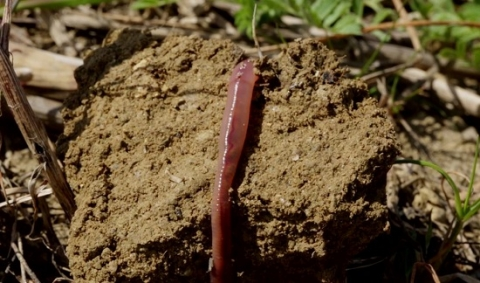 sols-santé-biodiversité-alimentation